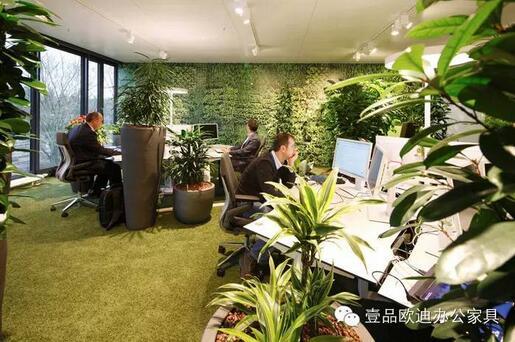 为什么办公室里一定要养植物?